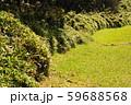 緑の歩道 59688568