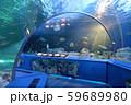 水族館 トンネル水槽 59689980