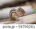 ドングリを食べるシマリス 59700261