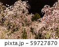 平安神宮 - 春のライトアップ 59727870