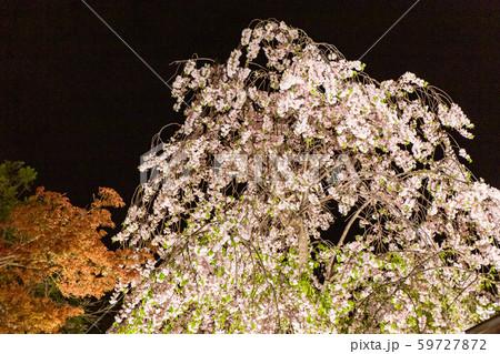 平安神宮 - ライトアップ 59727872
