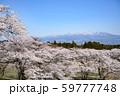 桜と赤城山 59777748