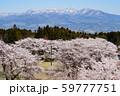 桜と赤城山 59777751