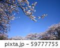 青空と桜 59777755
