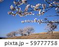 青空と桜 59777758