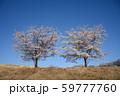 青空と桜 59777760