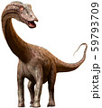 Diplodocus dinosaur from the Jurassic era 3D illustration 59793709