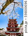 桜と塔 59800696