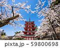 五重塔と桜 59800698