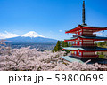 浅間神社の春 59800699