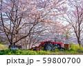 農場の桜 59800700