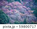 吉野山の春 59800717