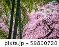梅と竹林 59800720