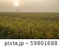 日の出直後の実った田 59801688