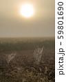 蜘蛛の巣と太陽 59801690