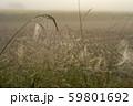 朝露のついた蜘蛛の巣 59801692