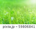 逆光で鮮やかな草原で瓶に一輪の幸運の四つ葉のクローバー 朝方 59806841