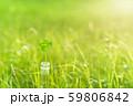 逆光で鮮やかな草原で瓶に一輪の幸運の四つ葉のクローバー 夕方 59806842