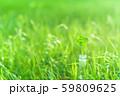 逆光で鮮やかな草原で瓶に一輪の幸運の四つ葉のクローバー 朝方 59809625