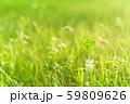 逆光で鮮やかな草原で瓶に一輪の幸運の四つ葉のクローバー 夕方 59809626