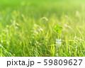 逆光で鮮やかな草原で瓶に一輪の幸運の四つ葉のクローバー 昼間 59809627
