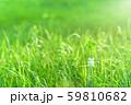 逆光で鮮やかな草原で瓶に一輪の幸運の四つ葉のクローバー 朝方 59810682