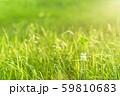 逆光で鮮やかな草原で瓶に一輪の幸運の四つ葉のクローバー 夕方 59810683