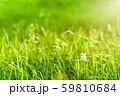 逆光で鮮やかな草原で瓶に一輪の幸運の四つ葉のクローバー 昼間くっきり 59810684