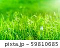逆光で鮮やかな草原で瓶に一輪の幸運の四つ葉のクローバー 朝方くっきり 59810685