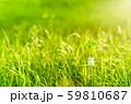逆光で鮮やかな草原で瓶に一輪の幸運の四つ葉のクローバー 夕方くっきり 59810687