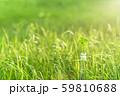逆光で鮮やかな草原で瓶に一輪の幸運の四つ葉のクローバー 昼間 59810688