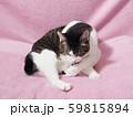 毛づくろいをする猫 59815894