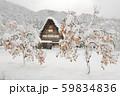 【世界遺産】[岐阜県]白川郷の冬景色。雪の降り積もった柿の木と共に。 59834836