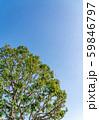 自然イメージ 59846797