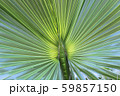 Large palm leaf, closeup natural background 59857150