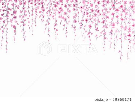 しだれ桜 背景 筆書き 水墨画 59869171