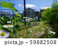 道端の雑草 59882508