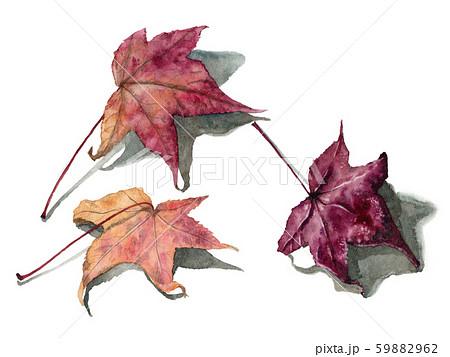 水彩で描いたリアルなモミジバフウの落ち葉 59882962
