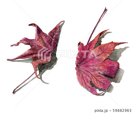 水彩で描いたリアルなモミジバフウの落ち葉 59882963