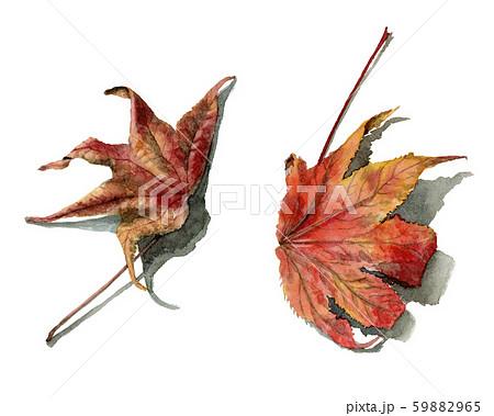 水彩で描いたリアルなモミジバフウの落ち葉 59882965