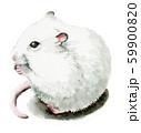 水彩で描いた白いねずみ 59900820