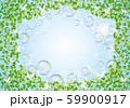 木:木 枝 自然 緑 葉 新緑 新芽 初夏 夏 春 エコ グリーン 59900917