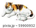 水彩で描いた三毛猫と白ねずみ 59900932