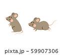ネズミ 59907306