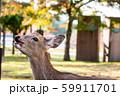 奈良の鹿 59911701