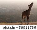 夕日とシカ 59911736