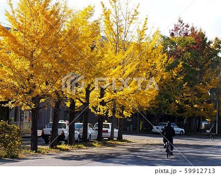 秋の競輪場界隈(イチョウ並木の色付き) 59912713