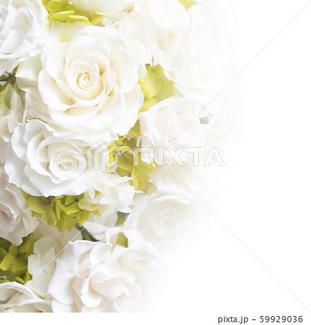 背景-バラ-白 59929036