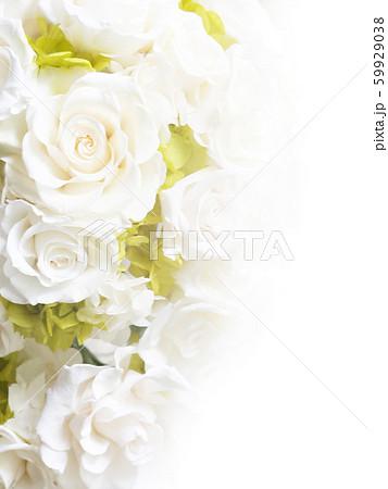 背景-バラ-白 59929038