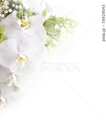 背景-花-蘭-白 59929043